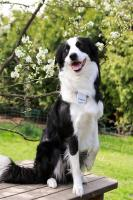 Tractive GPS Pet Tracking - Lokalizator GPS dla zwierząt (iOS/Android)