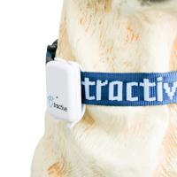Tractive Collar Small - Obroża (30-50 cm / 2 cm)